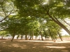Das Baumdach